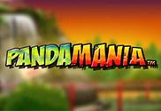 Panda-Mania